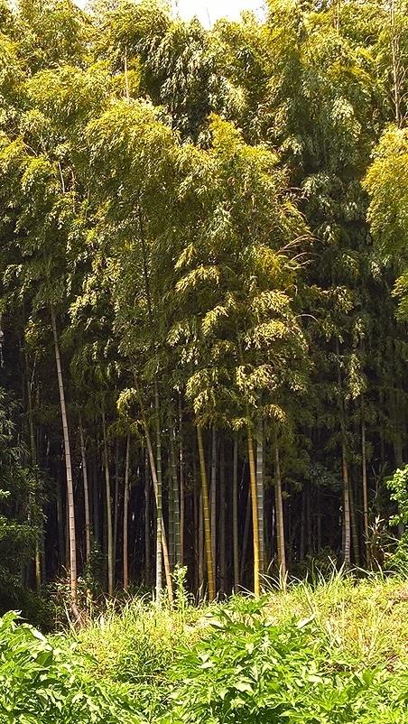 Bambumetsästä löytyy..