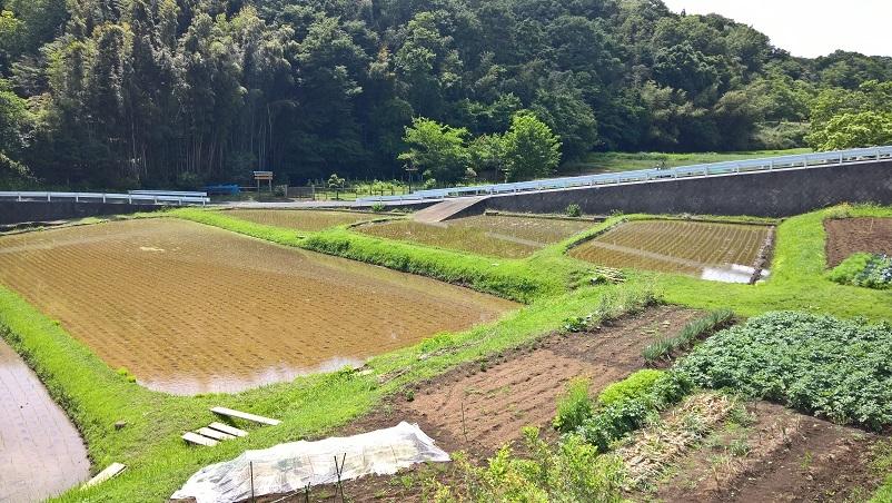 Riisipeltoja